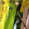 日本三大七夕の安城七夕まつりの歴史と見所は?交通アクセスは?